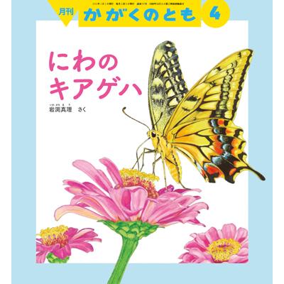 iwabuchi01